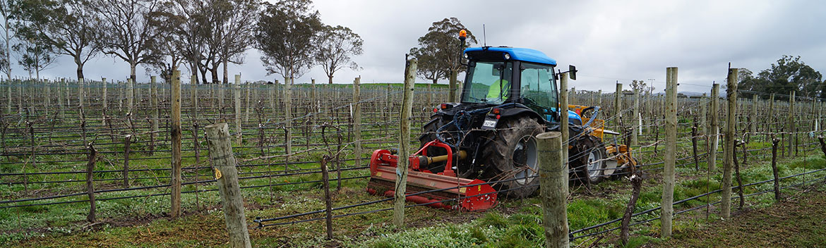 vitiworks-vineyard-management-and-services-in-the-adelaide-hills-machine-harvesting