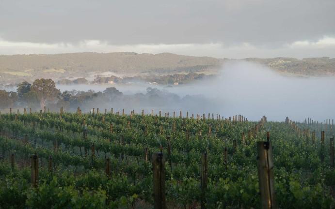 vitiworks-vineyard-management-frost-protection-adelaide-hills-7