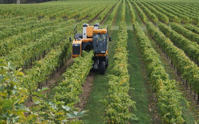vitiworks-vineyard-management-harvesting-adelaide-hills-18