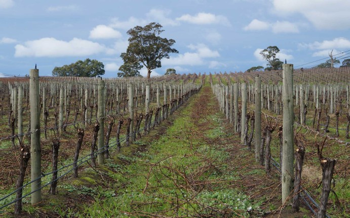 vitiworks-vineyard-viticulturalist-management-and-expertise-pruning-adelaide-hills-8